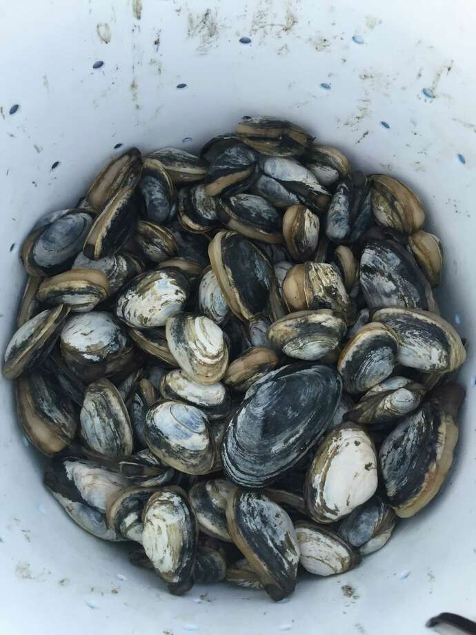 Fresh Steamers Photo: Margaret Mazer / Contributed Photo / Westport News