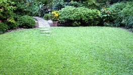For a lush lawn, apply weed killers first, then fertilze after temperatures are warm enough for the grass to be growing.  9.28.11 Our Yard