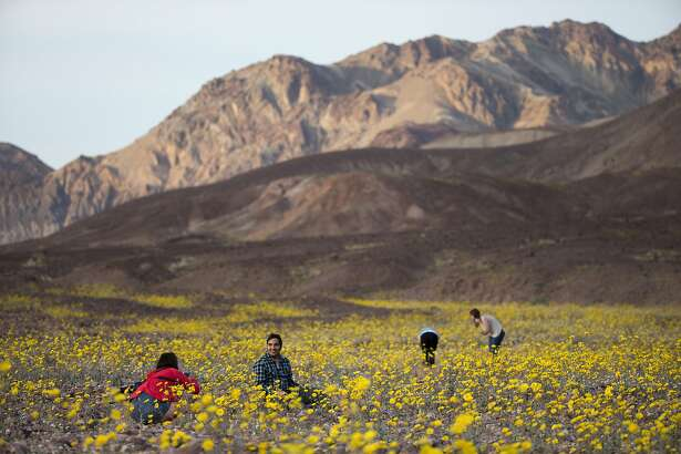 "FILE - In this Feb. 24, 2016 photo, tourists take picture of wildflowers near Badwater Basin in Death Valley, Calif. A rare ""super bloom"" of wildflowers in Death Valley National Park covered the hottest and driest place in North America with a carpet of gold, attracting tourists from all over the world and enchanting visitors with a stunning display from nature's paint brush. (AP Photo/Jae C. Hong, File)"