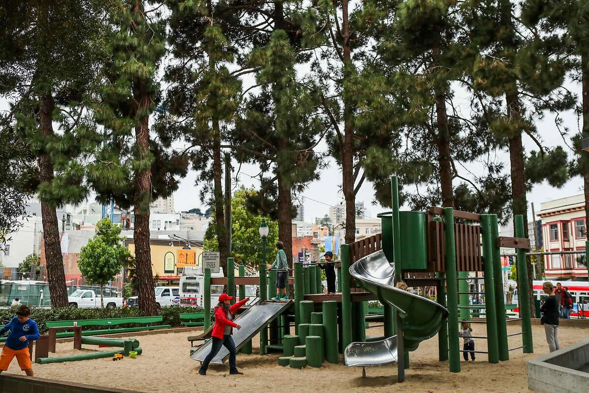 People use the playground next to grouping of pine trees in, San Francisco, California, on Thursday, Aug. 25, 2016. The limb of one of the pine trees (second from left) paralyzed Emma Zhou who was near the playground on August 12.
