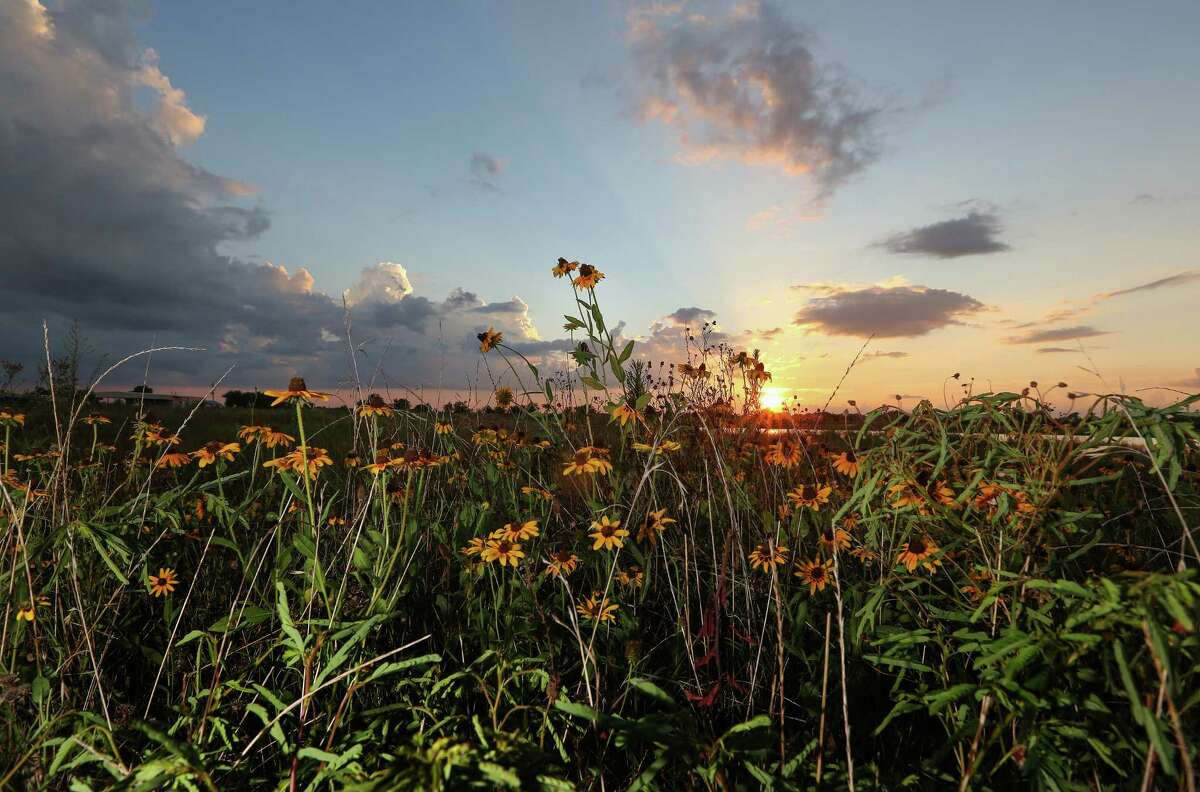 Green infrastructure, including wetlands, forests and prairies, such as the Katy Prairie northwest of Houston, is key to managing flooding.