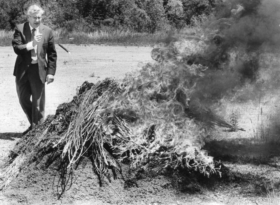 Midland County Sheriff James McNutt throws a flare onto a pile of marijuana, estimated at 350 pounds and worth about $210,000. The ceremonial burning took place at an undisclosed location in Midland County. The cannabis was confiscated from a garage . June 1984 Photo: Daily News File Photos