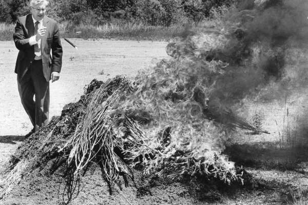 Midland County Sheriff James McNutt throws a flare onto a pile of marijuana, estimated at 350 pounds and worth about $210,000. The ceremonial burning took place at an undisclosed location in Midland County. The cannabis was confiscated from a garage . June 1984