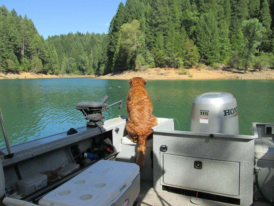 At Scotts Flat Lake near Nevada City, Buddy the golden retriever is fixated on a few ducks, driving him crazy. Scotts Flat does not allow Personal Watercraft and has a family-style campground Photo: Tom Stienstra, Tom Stienstra / The Chronicle