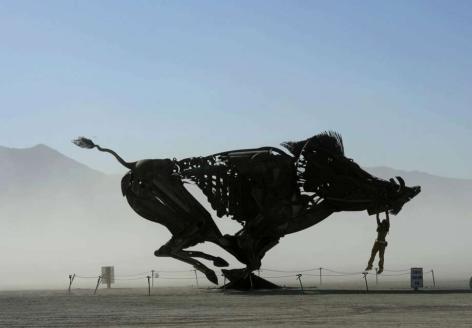 San Franciscos Burning Man Exodus Proves Mostly A Myth San - Wild pigs map us 1930 2016