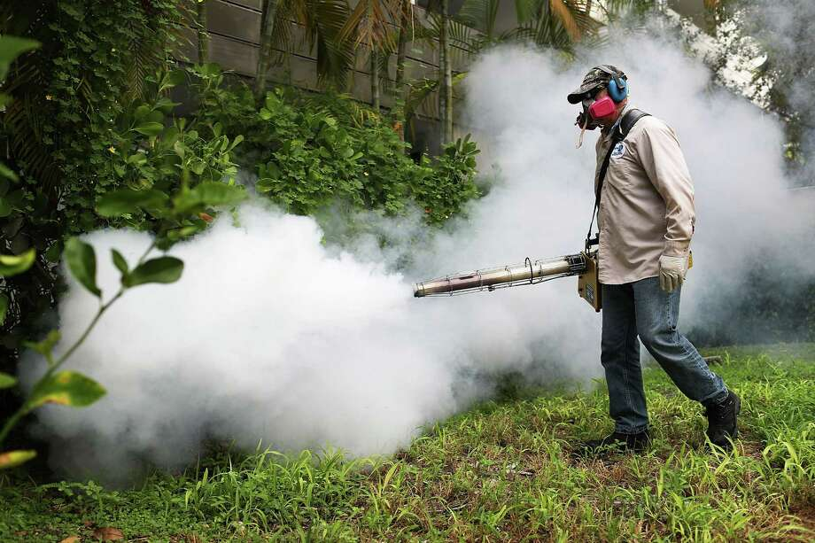 Lapses in mosquito control efforts have allowed certain species to reestablish. Here, Carlos Varas, a Miami-Dade County mosquito control inspector, sprays pesticide in Miami Beach to control the Zika virus outbreak. Photo: Joe Raedle, Staff / 2016 Getty Images
