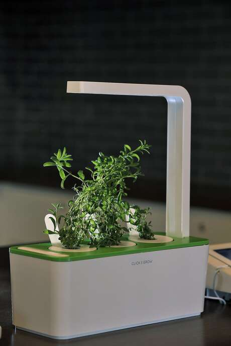 The Click & Grow Smart Herb Garden is one of several smart kitchen appliances on display at B8ta. Photo: Carlos Avila Gonzalez, The Chronicle