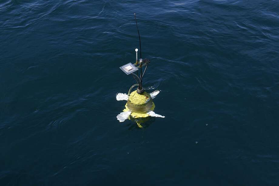 A larvae robot floats in the water of Bodega Bay. Photo: Michael Short, Special To The Chronicle
