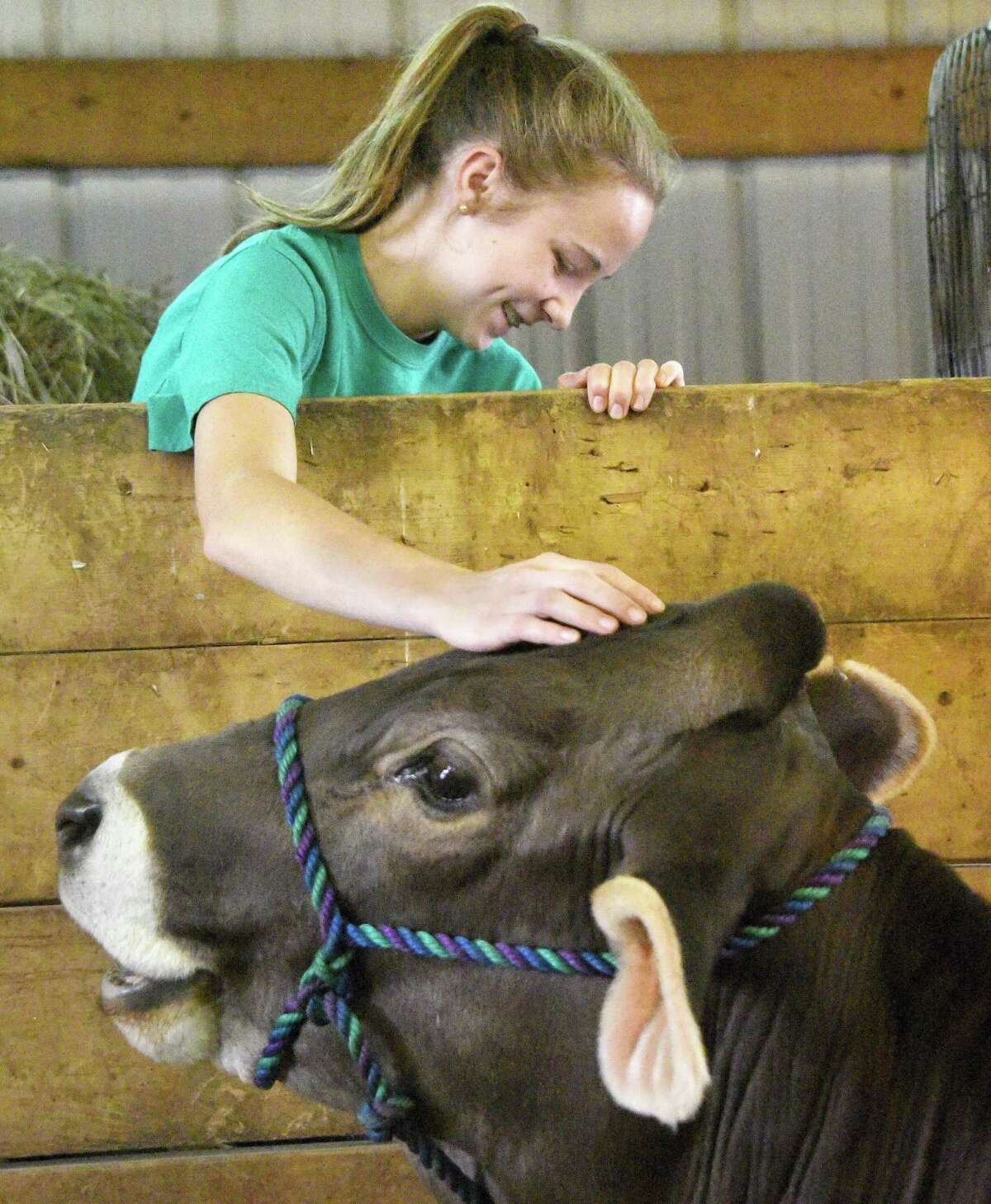 Britany Tyler, 16, of Hartford, NY, with her Brown Swiss Calamity in the cow barn at the Schaghticoke Fair Wednesday Aug. 31, 2016 in Schaghticoke, NY. (John Carl D'Annibale / Times Union)