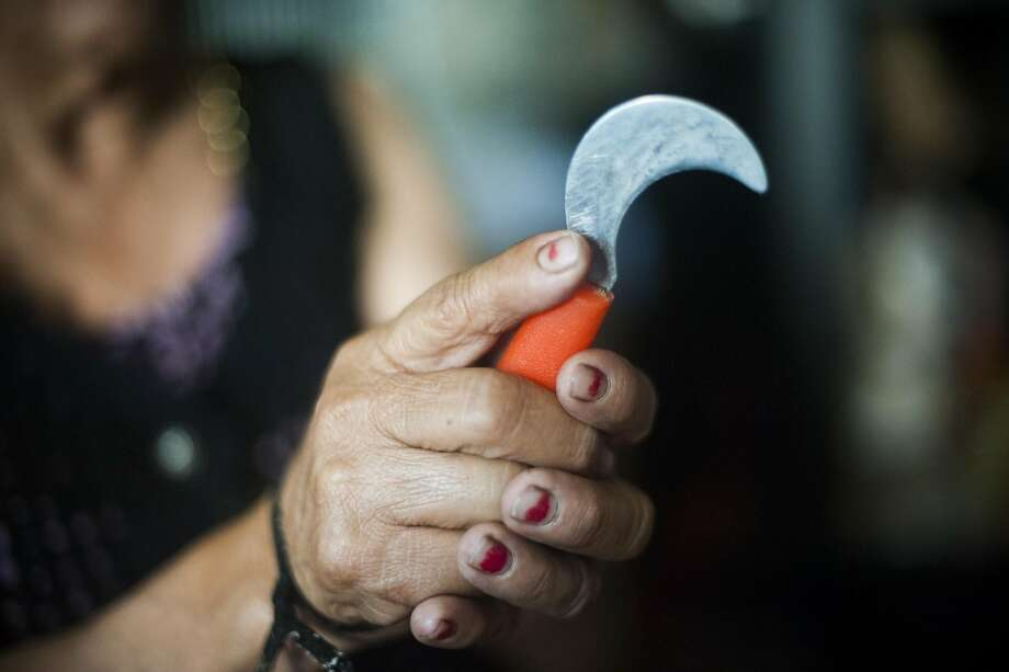 The knife used for harvesting grapes in Santa Rosa, CA on August 31, 2016.  Recent state legislation is headed to the governor's office that would provide farmworkers overtime pay after eight hours of work. Photo: Brian L. Frank, Special To The Chronicle