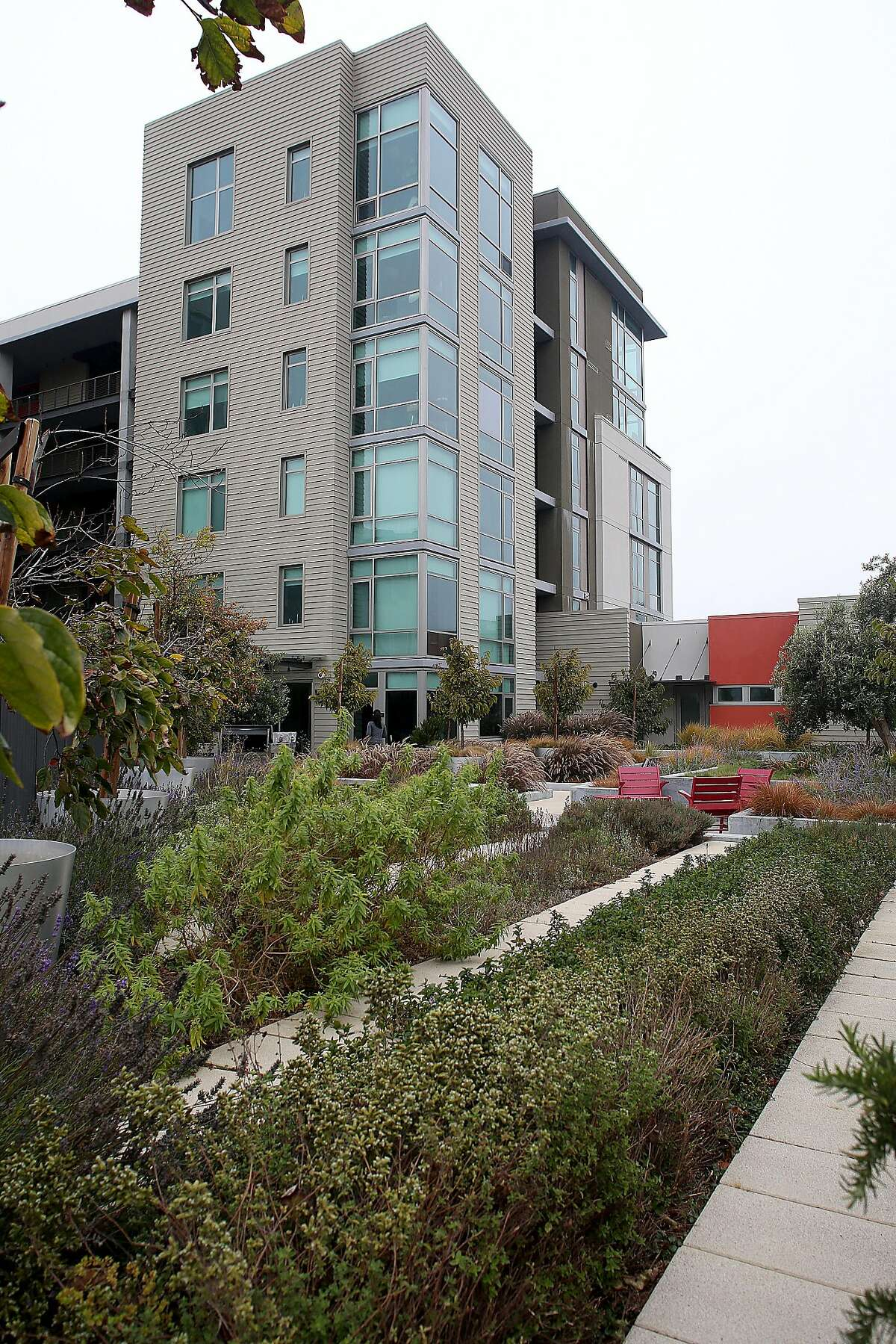 A view of the herb rooftop garden with oregano in the foreground at 38 Dolores St. on Thursday, September 1, 2016, in San Francisco, Calif.