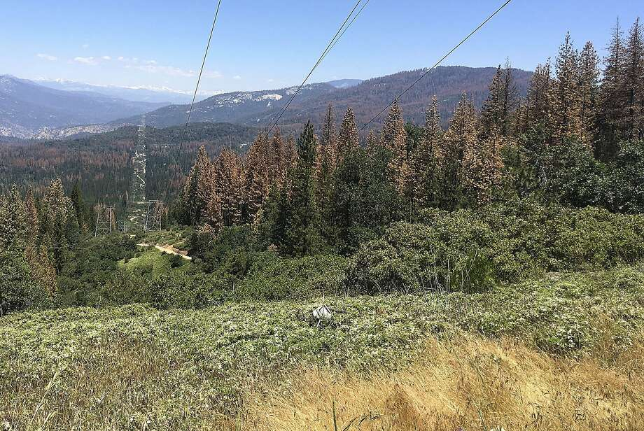 This June 6, 2016 photo shows patches of dead and dying trees near Cressman, Calif. The U.S. Forest Service announced Wednesday, June 22, 2016, that the number of trees in California's Sierra Nevada forests killed by drought and a bark beetle epidemic has dramatically increased since last year. (AP Photo/Scott Smith) Photo: Scott Smith, Associated Press