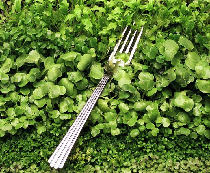 Microgreens include radish, arugula, celery and red mustard.
