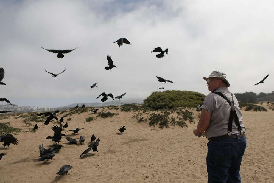 "Gunnar ""Woody"" Woodyard of Pacifica feeds  crows at Fort Funston on Friday, September 2,  2016 in San Francisco, California. Photo: Gabriella Angotti-Jones, The Chronicle"