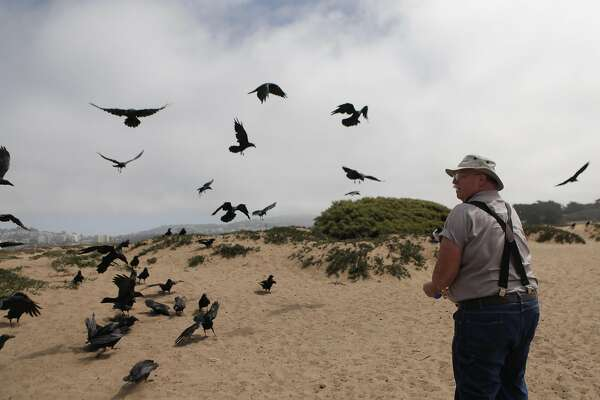 "Gunnar ""Woody"" Woodyard of Pacifica feeds  crows at Fort Funston on Friday, September 2,  2016 in San Francisco, California."