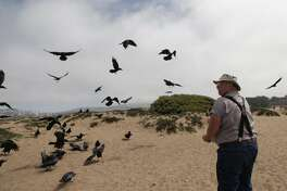 """Gunnar """"Woody"""" Woodyard of Pacifica feeds  crows at Fort Funston on Friday, September 2,  2016 in San Francisco, California."""