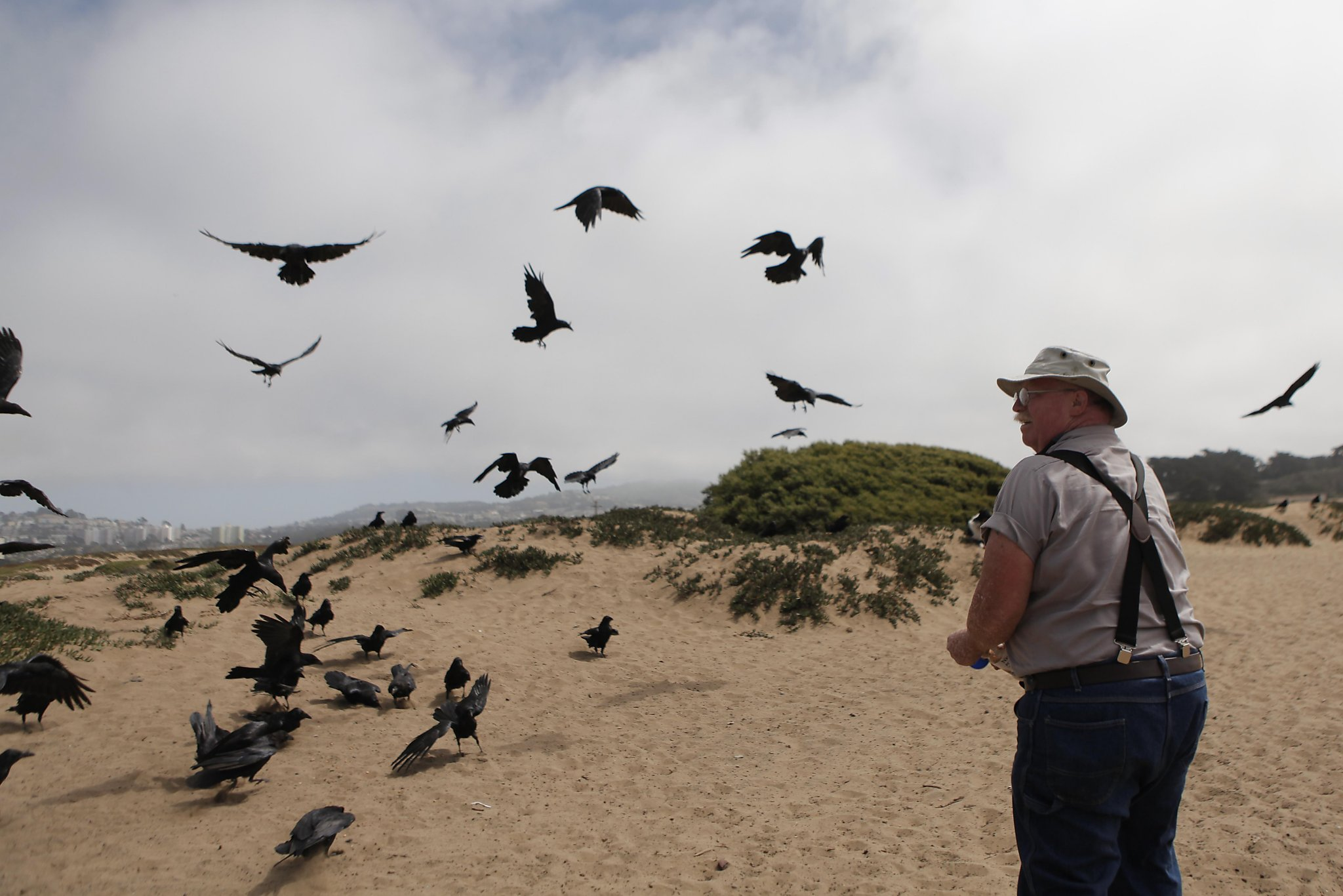 Just like Millennials': Raven, crow populations have
