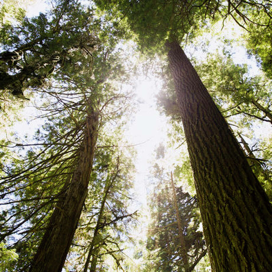 Redwood National ParkRedwood National Park boasts some of the largest coastal redwoods in the West and offers visitors opportunities to spot the leafy giants by foot or car. Photo: Erin Kunkel