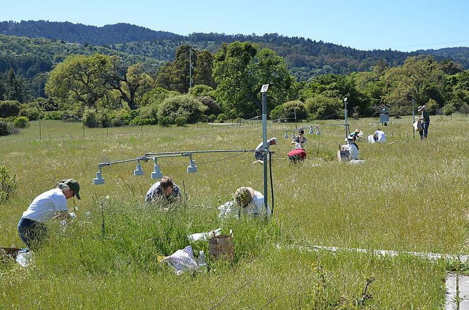 The experiment subjected plots of the grassland ecosystem to greater fossil fuel effects for 17 years. Photo: Nona Chiariello, Associated Press