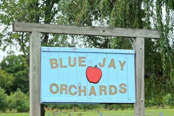 Blue Jay Orchards, in Bethel, has been effected by this years drought, their trees have produced fewer apples which means less available hours for apple picking this fall. Tuesday, September 6, 2016, in Bethel, Conn.