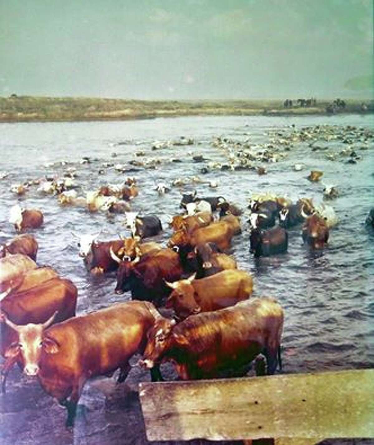 Padre Island National Shoreline shared a Facebook photo revealing a vintage setting of the area, when portions of it were an open cattle range.
