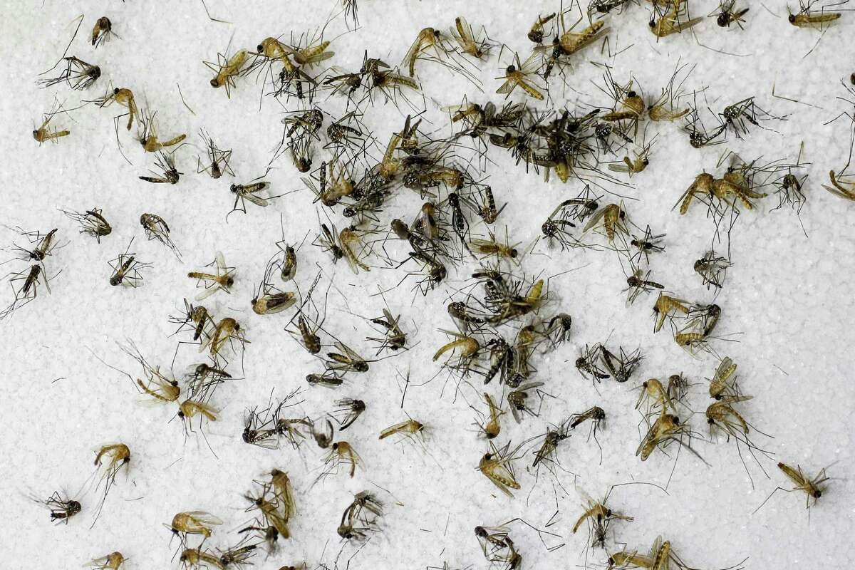 Dallas and Houston finished as a the second and third-most mosquito-infested cities in the U.S., according to a new Terminix study.