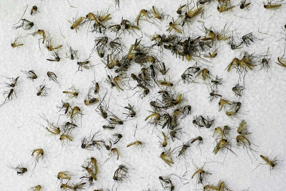 Dallas and Houston finished as a the second and third-most mosquito-infested cities in the U.S., according to a new Terminix study. Photo: Houston Chronicle File Photo / © 2016  Houston Chronicle