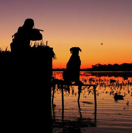 An early push of blue-winged teal and welcoming wetland habitat conditions on coastal prairies and marshes thanks to the wettest August in a century have set the stage for a great opening of Texas' 16-day teal-only hunting season Saturday. Photo: Shannon Tompkins