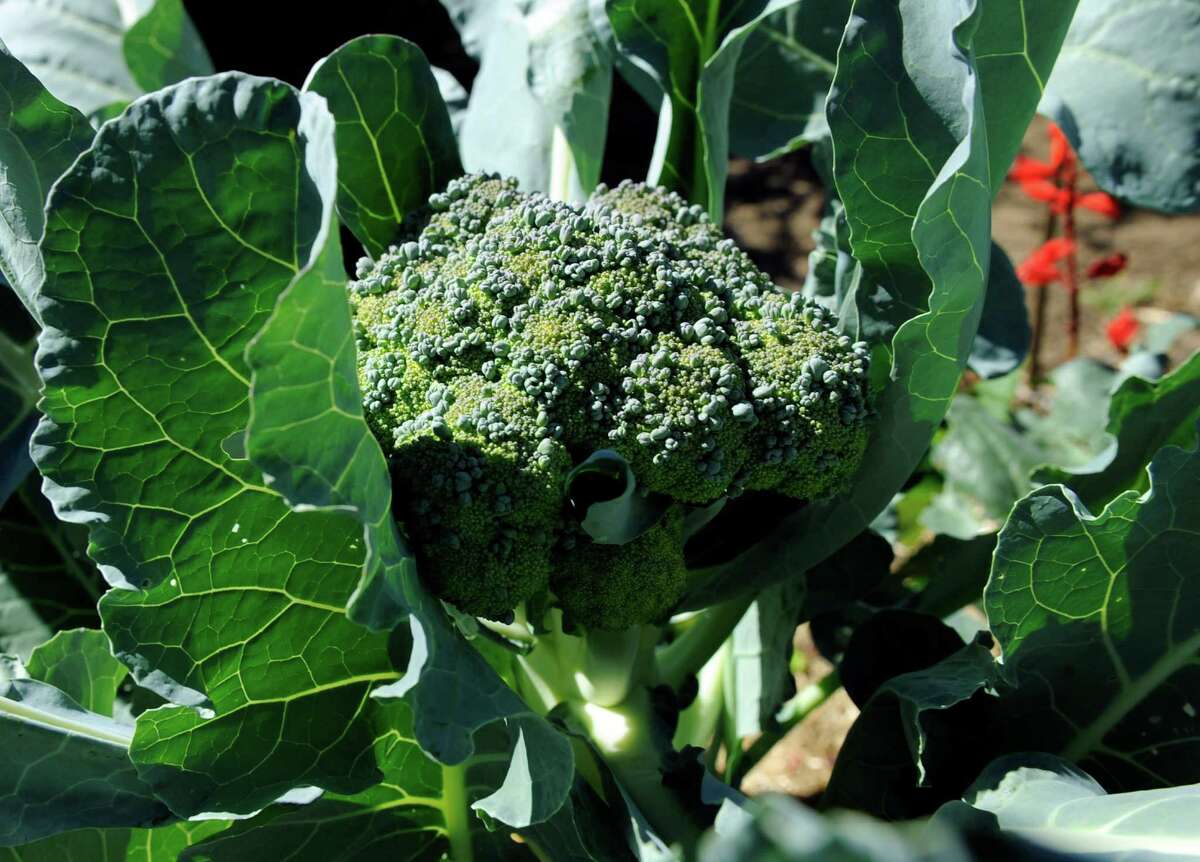 Broccoli: Delicious in stir-fry, but smoking it will not get you buzzed.