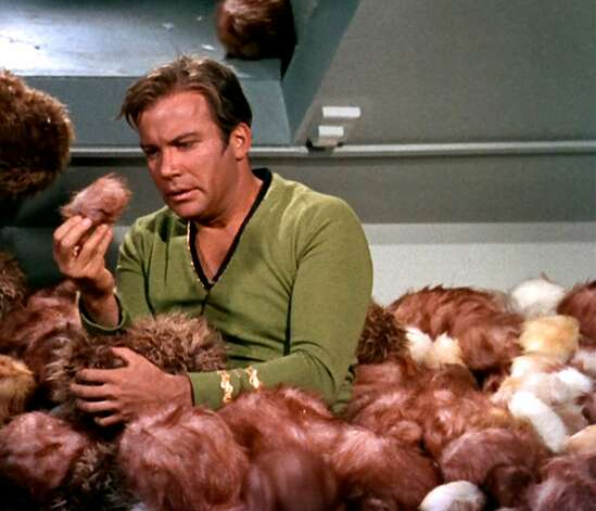"""The story goes that the crew members kept throwing Tribblesat Shatner during the filming of this scene so that the """"avalanche of Tribbles"""" illusion would be maintained through eight takes. Shatner was repeatedly hit the head with the lobbed fur balls, which might explain the harried expression on his face. """"The Trouble With Tribbles"""" ranks as one of the most popular Trek episodes of all time. Photo: Getty Images, CBS Via Getty Images"""