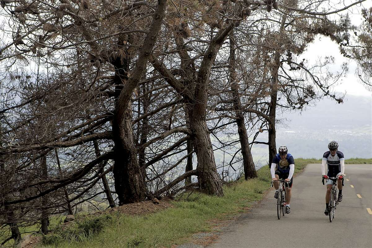 Two road bikers ride two abreast earlier this year up Summit Road at Mount Diablo. A new solid double-yellow line in the road will require bikes to ride single file and difficult for vehicles to pass bikes -- to not cross the double-yellow line while still providing three feet of distance from bikes.