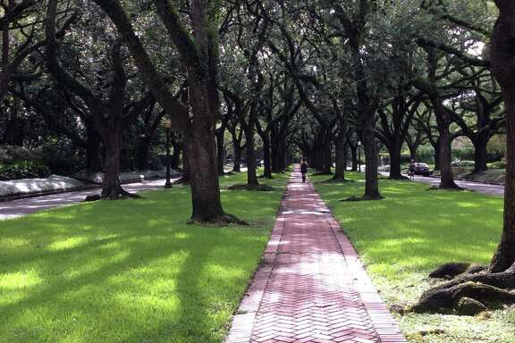 Double rows of old live oak trees form a sprawling canopy across North and South Boulevards in Houston's Broadacres neighborhood. The homes were built for some of Houston's early prominent families and many were designed by architect John Staub.