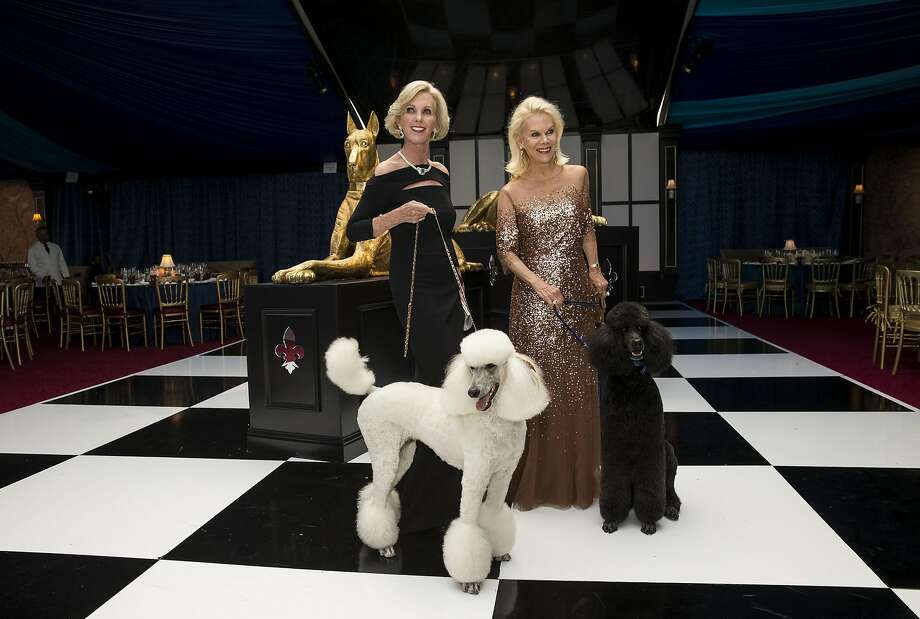 Patricia Sprincin (left) and Sandra Farris, co-chairs of the San Francisco Opera Guild's Opera Ball 2016, pose for photos with French poodles in the patron's dinner tent outside War Memorial Opera House in San Francisco, Calif., on Friday, September 9, 2016. The gala event inaugurated the opera's 94th season. Photo: Laura Morton, Special To The Chronicle