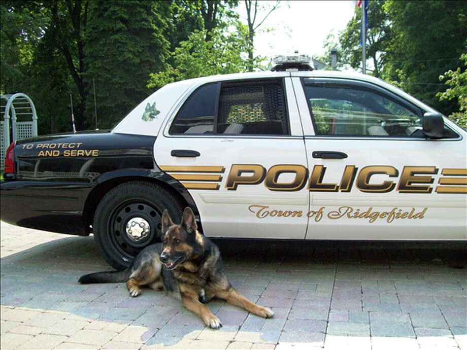 Zeus, a Ridgefield Police Dog. Photo: Contributed Photo / Contributed Photo / The News-Times Contributed