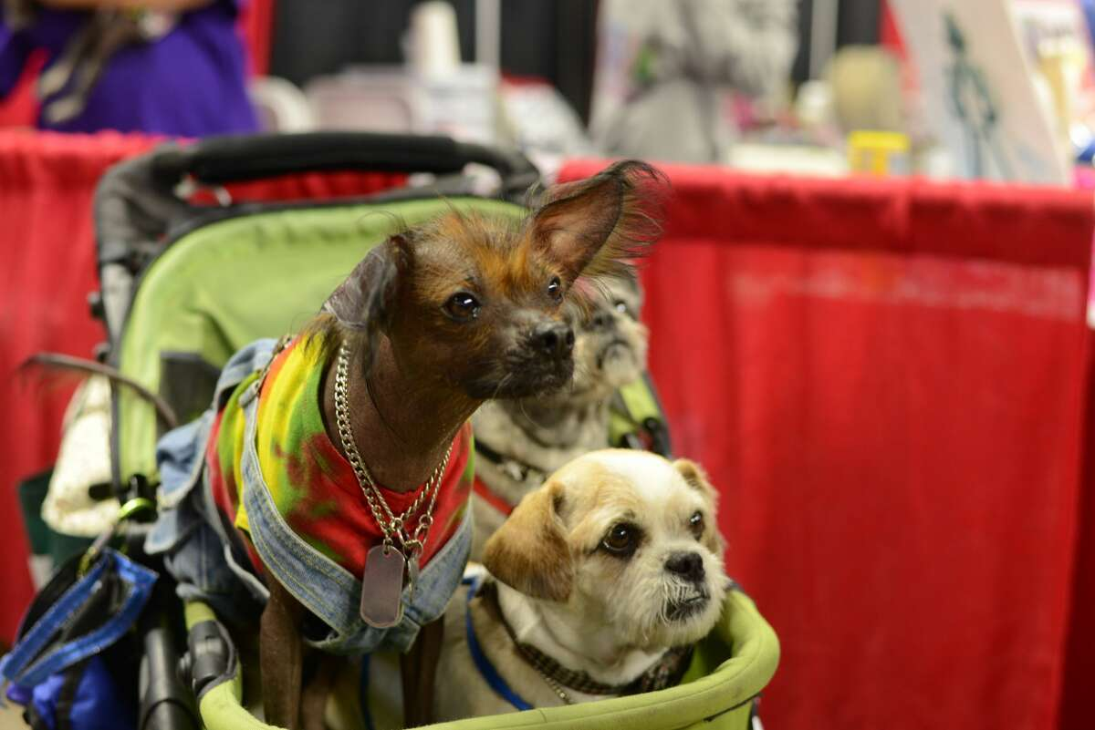 The Connecticut Pet Expo was held at Webster Bank Arena in Bridgeport onSeptember 10, 2016. Animal lovers met pets up for adoption, enjoyed live entertainment, shopped vendors and more. Were you SEEN?