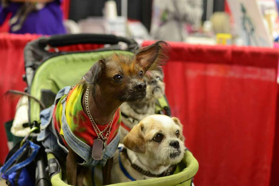 The Connecticut Pet Expo was held at Webster Bank Arena in Bridgeport on September 10, 2016. Animal lovers met pets up for adoption, enjoyed live entertainment, shopped vendors and more. Were you SEEN? Photo: Joseph DeFrancisco