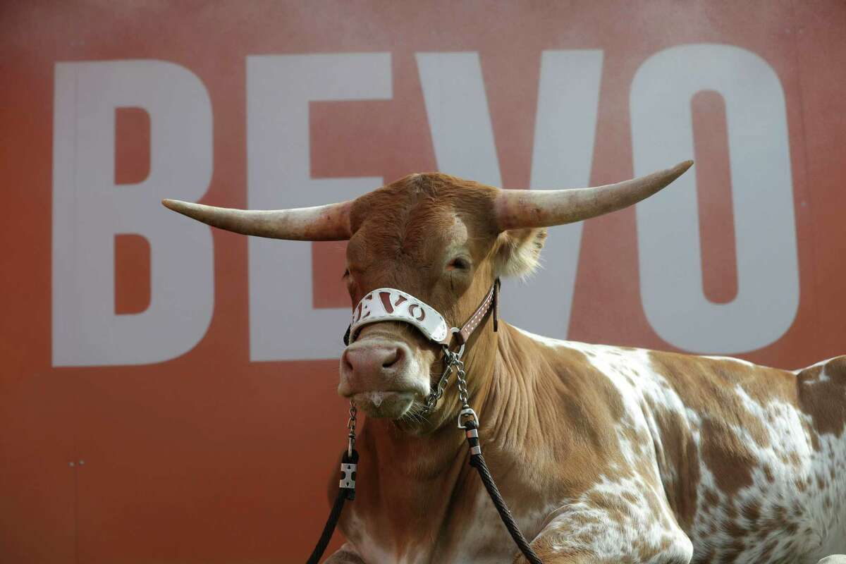 Bevo is not given any sort of medication to stay calm at public events, according to UT officials. (AP Photo/Eric Gay)