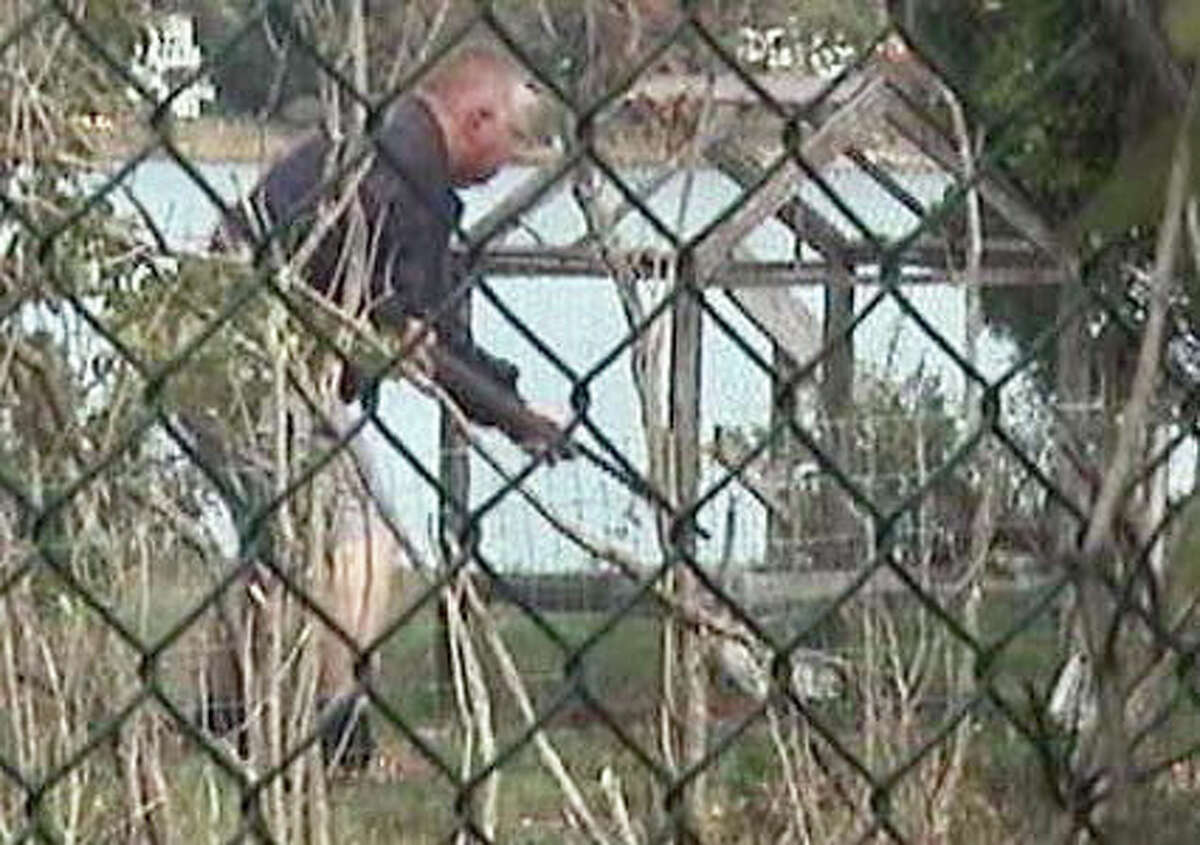 Thomas Kapusta, 63, will be sentenced Monday to killing federally protected hawks at his mother's home near Cove Island Park. The U.S. Attorney's Office released photos last week showing Kapusta pointing a pellet rifle into cages where he trapped the hawks.