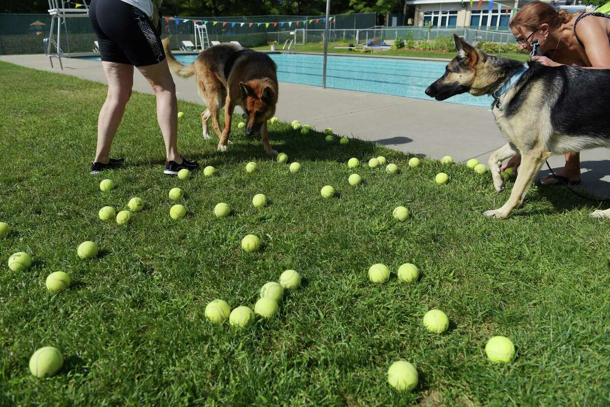 Balls for playing fetch fill the grass at the Dog Splash Pool Party at the at the Albany JCC on Sunday, Sept. 11, 2016, in Albany, N.Y. Proceeds from the fundraiser went to rescue groups in attendance including Good Shepherd K-9 Rescue, Karma K-9 Rescue and Mohawk Hudson Humane Society. (Paul Buckowski / Times Union)