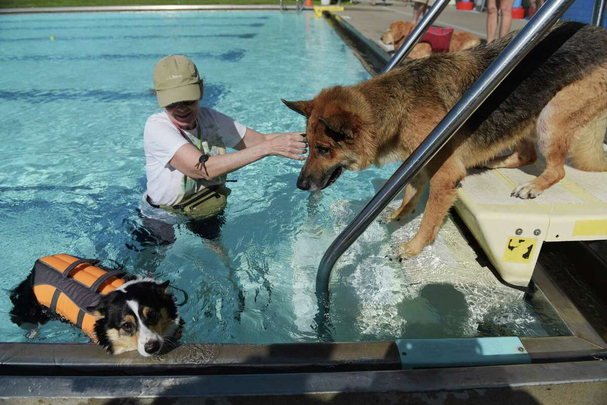 Holly Reese of Albany tries to get her dog, Kody, a German Shepard rescue dog, into the pool as Dakota, a Corgi from East Greenbush, swims by at the Dog Splash Pool Party at the at the Albany JCC on Sunday, Sept. 11, 2016, in Albany, N.Y. Proceeds from the fundraiser went to rescue groups in attendance including Good Shepherd K-9 Rescue, Karma K-9 Rescue and Mohawk Hudson Humane Society. (Paul Buckowski / Times Union)