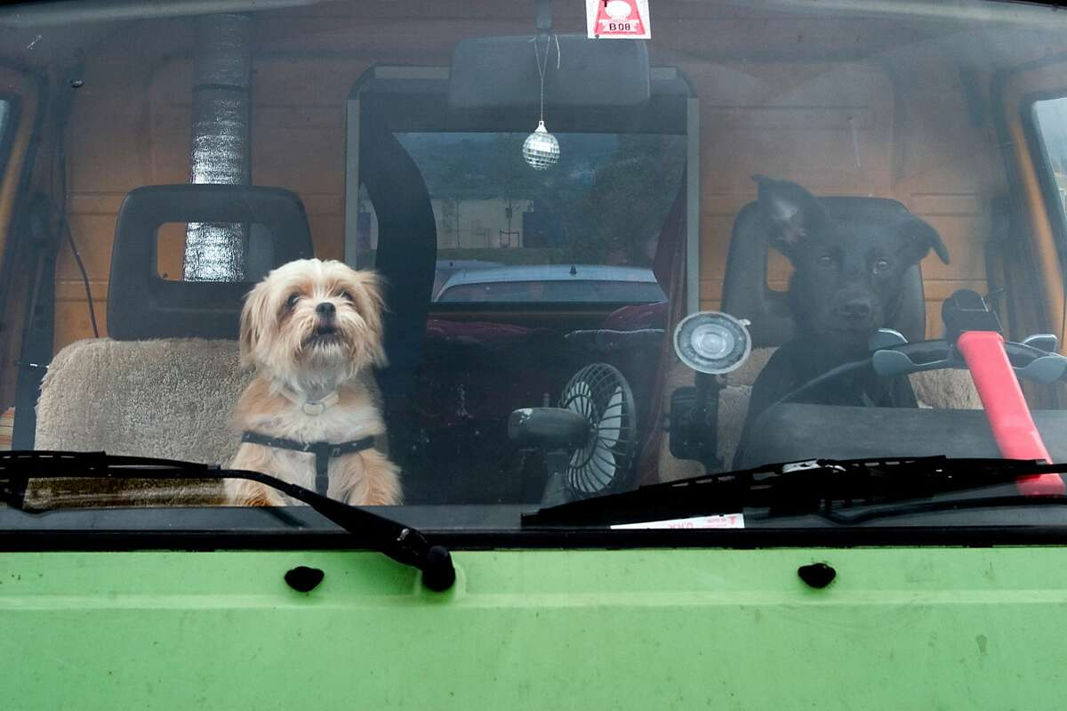 Just A Bunch Of Photos Of Dogs Driving Cars