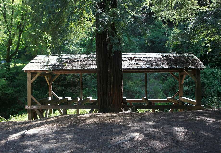 Old Mill Park in Mill Valley. Photo: Jill Schneider, The Chronicle