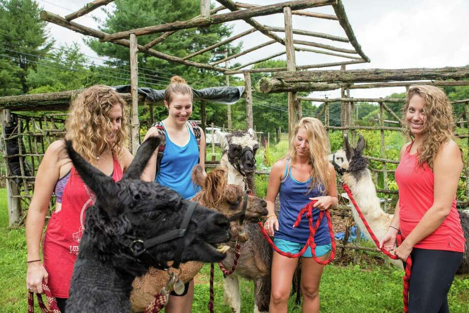 Brittany Batterton, left, Rebecca Perry, Lidia Ryan, and Laura Perry with llamas from Rowanwood Farm. Photo: Kyle Michael King / For Hearst Connecticut Media / Hearst Connecticut Media Group Freelance