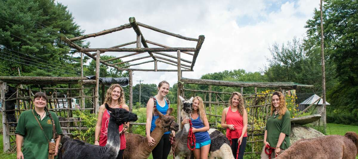 From Left, AJ Collier, Brittany Batterton, Rebecca Perry, Lidia Ryan, Laura Perry, and Leah Jaiman with llamas from Rowanwood Farm in Newtown, Conn. on Autust 21, 2016.