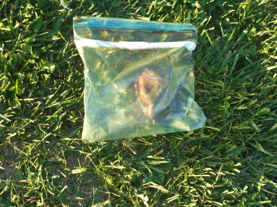 On Aug. 25, 2016, an EMS crew was outside of a Friendship Food Store in Norwalk, Ohio when they came across what is believed to be a human heart inside of a plastic bag. Photo: Courtesy/Norwalk Police Department