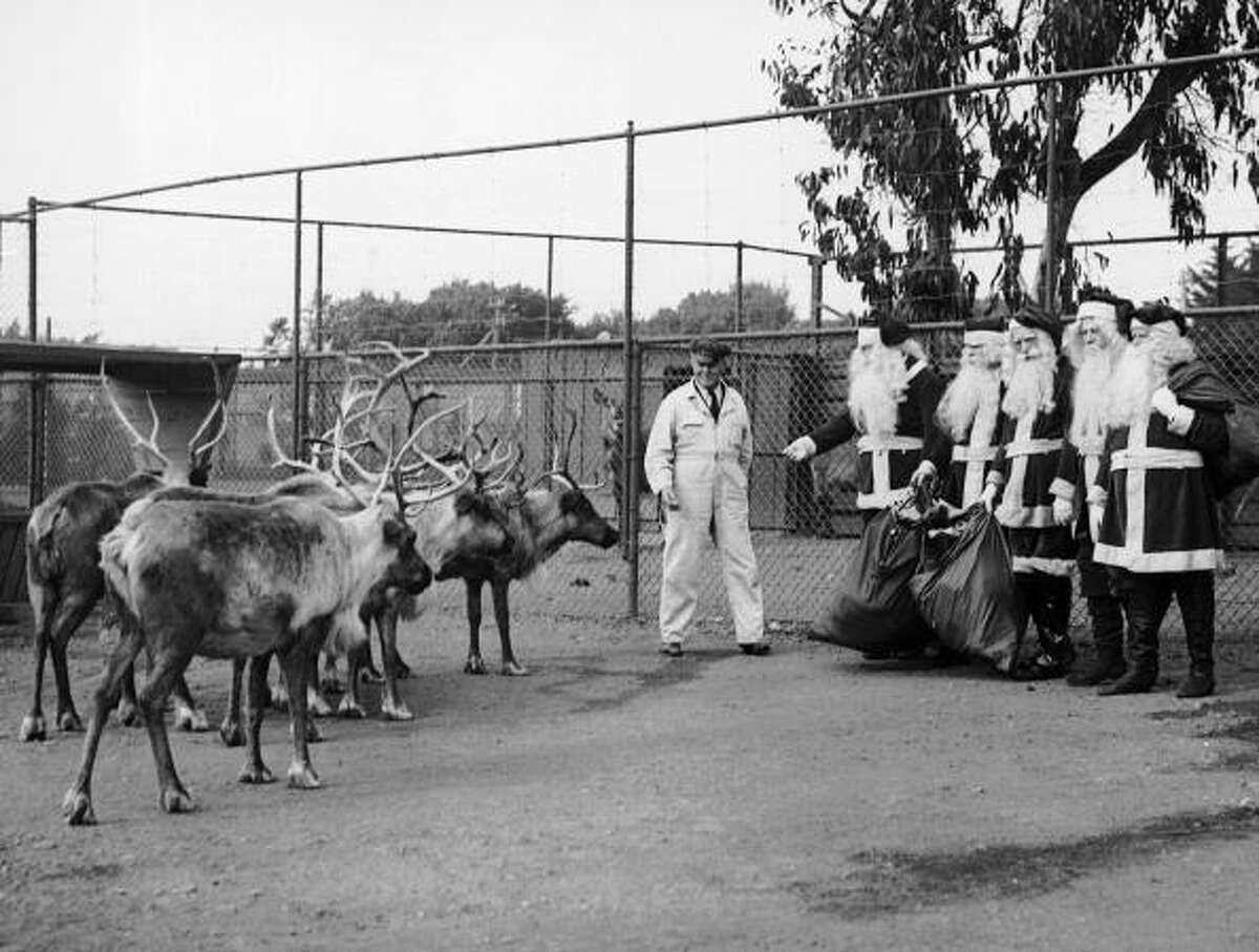 Five Santa Clauses Visiting Reindeers At The San Francisco Zoo On December 5, 1935. (Photo by Keystone-France/Gamma-Keystone via Getty Images)