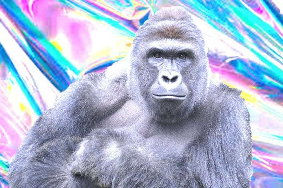 A Harambe hologram won't be at Day for Night in December but Bjork, Aphex Twin, Kaskade, Run the Jewels, Travis Scott, Odesza, Chelsea Wolfe. Lower  Dens, Uncle Acid and the Deadbeats, Marcel Khalife, a reunited Butthole  Surfers, The Jesus and Mary Chain, Banks, Washed Out, andRZA + Stone  Mecca Rider will be. Harambe, an Ohio zoo gorilla, was shot and killed May 28, 2016, after a 3-year-old boy got into his enclosure. Photo: Day For Night
