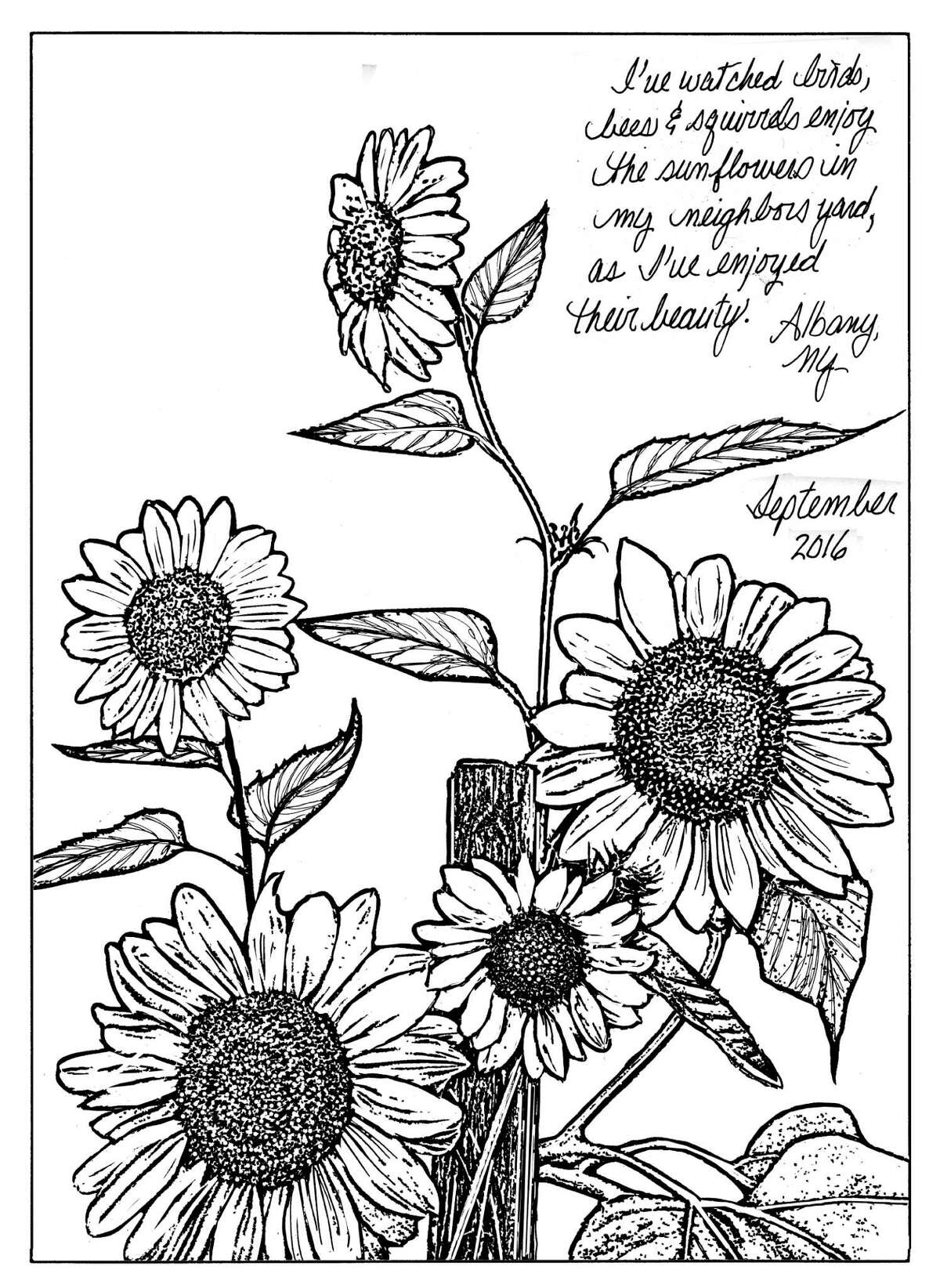 There are about 70 species of sunflowers. Cheerful and vibrant, this annual plant is recognized and cultivated worldwide as food for people, as well as for a wide variety of birds, including, sparrows, chickadees, titmice, nuthatches, woodpeckers, cardinals, jays, grosbeaks, finches and more. (Carol Coogan)