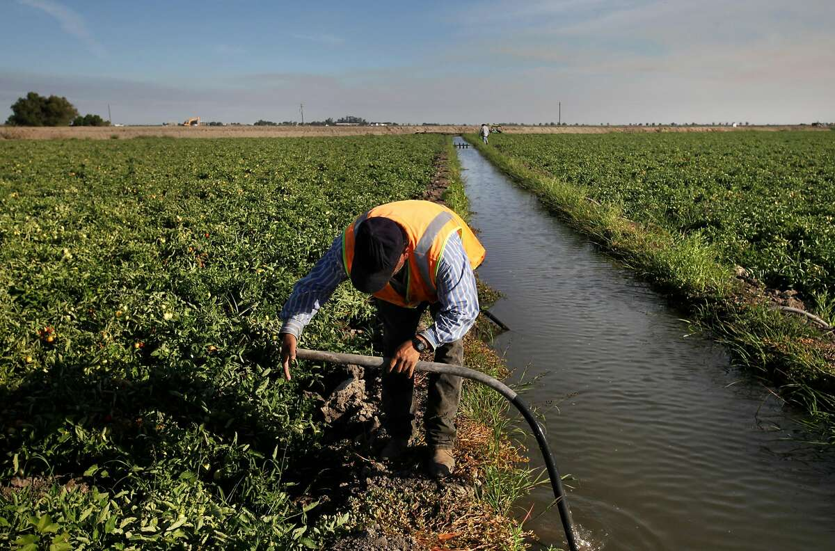 Emilio Alcantar, 49, uses suction to pull water into a tube as part of the furrow irrigation process for 90 acres of tomatoes on Bowles Farming Co. land July 24, 2014 in Los Banos, Calif. Cannon Michael, the president of the company, is concerned about sinking ground in a nearby area, which is making it harder for the groundwater under his land to get to it as the angle increases below the surface. Most Central Valley farmers received no more than a 5 percent water allotment this season from government water sources, leaving many farmers with no choice but to pump ground water to keep their businesses afloat. The San Luis Canal Company is a private water company that sells to nearly 100 farmers working 45,000 acres in the Los Banos area. The company has historic water rights allowing it to ship water from the San Joaquin River even in dry years, and it also supplements its supply with a small amount of ground water. Over the past few years, though, Chase Hurley, General Manager of the San Luis Canal Company, has been concerned about the long-term effects of heavy ground water pumping from nearby land. Hurley and others have found that the ground in certain areas is sinking half to a quarter of a foot a year because of the pumping. The sinking ground has brought up concerns with possible flooding into nearby farmland from a dirt canal designed for routing flood water past the area. Hurley is also concerned that the company's dam will begin losing water as the land continues to sink. Farmers in the area are working together to try and curb the problem themselves by replenishing the aquifer. One of the plans involves leaving specific acres of land inactive with the intention of using it to capture water when it does rain again, says Hurley. Local farmers stand to lose business if the ground water supply declines, and...