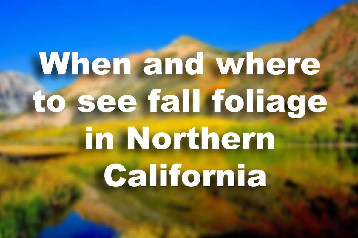 When and where to view the fall foliage in Northern Califorina